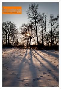 Schlosspark Belvedere im Schnee